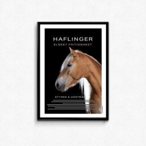 Plakat til hestepigen. Hesterace plakat med beskrivelse og billede af haflinger