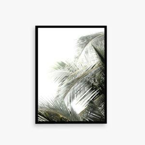 PALMDECO Plakat, palm, palme, art