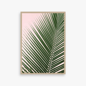PALMPINK Plakat, palm, palme, art