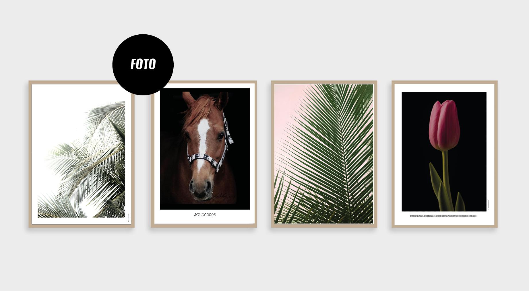 hesteplakat, fotoplakat, blomsterplakat, palme